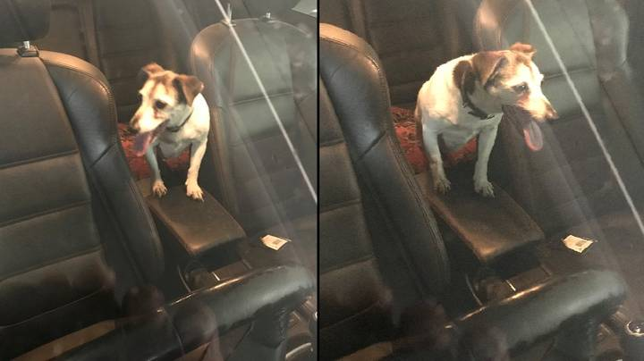 Police Save Dog Stuck In Car On Hottest Day Of The Year