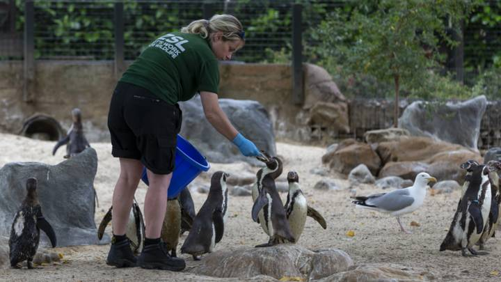 London And Whipsnade Zoos Are Looking For Volunteers