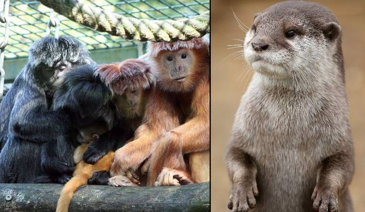 This Video Of A Bevy Of Otters Killing A Monkey Will Devastate You