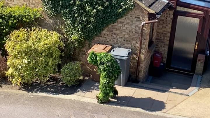 Neighbour Caught Escaping Coronavirus Lockdown By Dressing As A Bush
