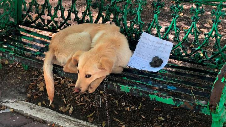 Pup Found Tied To Park Bench With Heart-Breaking Note