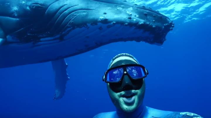 Diver Captures Once In A Lifetime Selfie With Giant Whale