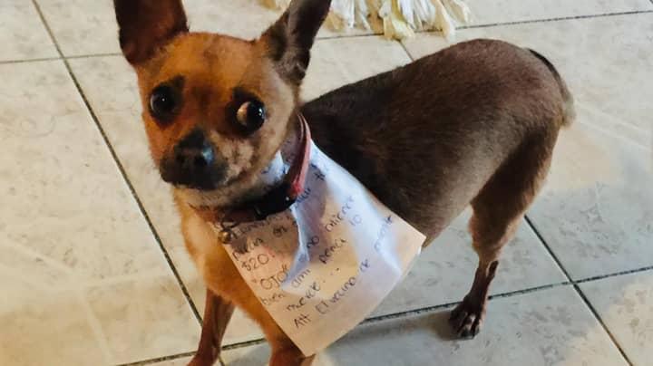 Man In Coronavirus Lockdown Sends Dog To Store To Get Bag Of Cheetos