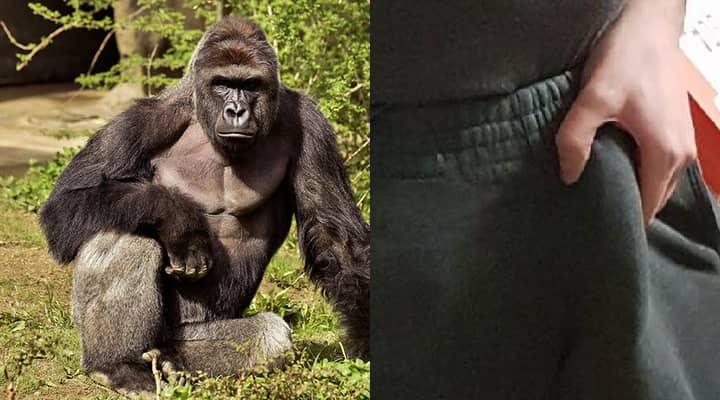 penis w gorilla pogrubienie pompy penisa