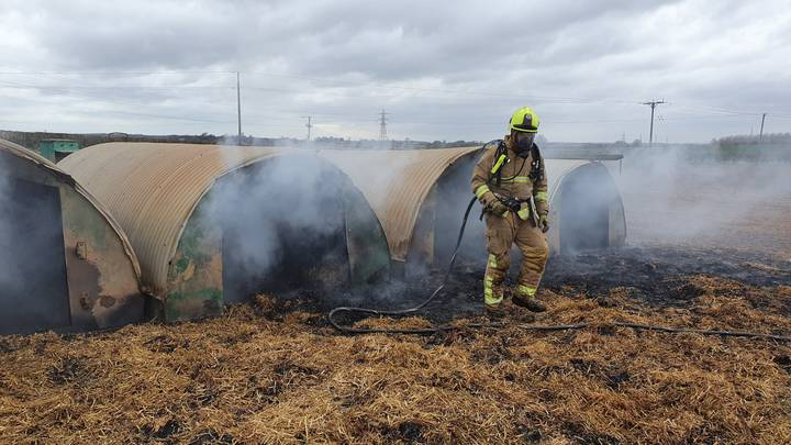 Pig Starts Huge Fire After Pooping Out Pedometer