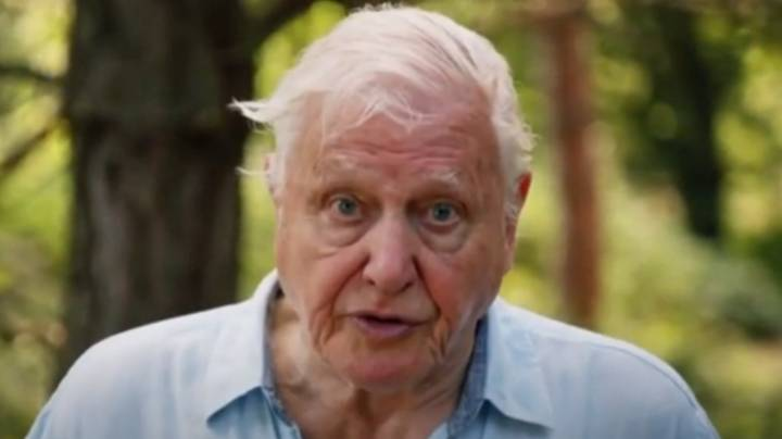 ​David Attenborough Warns Our Planet Is 'Facing A Crisis'