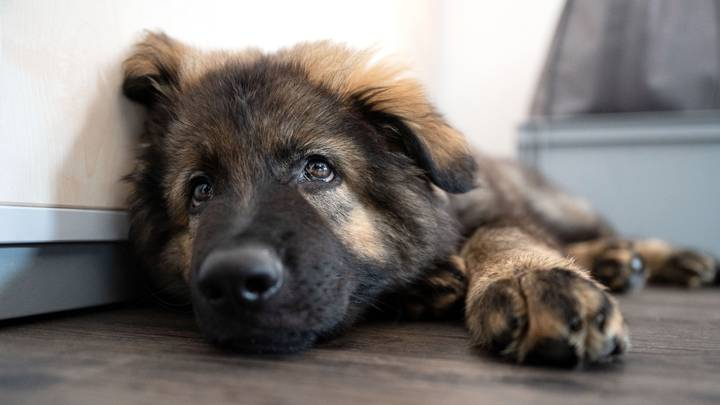 Ministers Considering Plans To Ban Cash Sales Of Pets