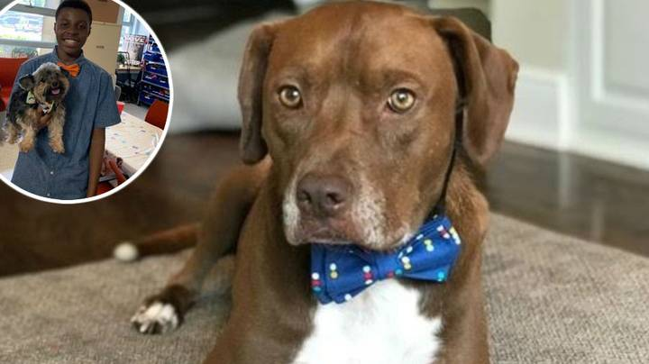 The 12-Year-Old Boy Who Designs Bow Ties To Help Dogs Get Adopted