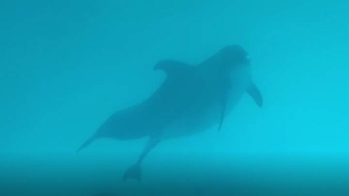 Pregnant Dolphin Gives Birth During Live Show
