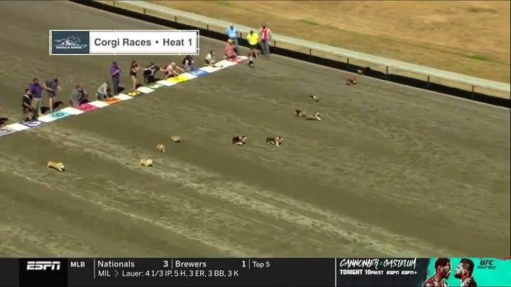 Viewers Baffled After ESPN Broadcasts Corgi Racing On Main Channel