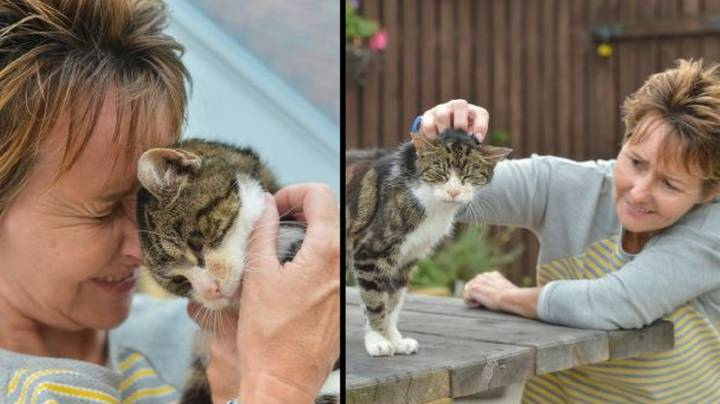 Elderly Cat, 17, Finds Its Way Home After Going Missing 13 Years Ago