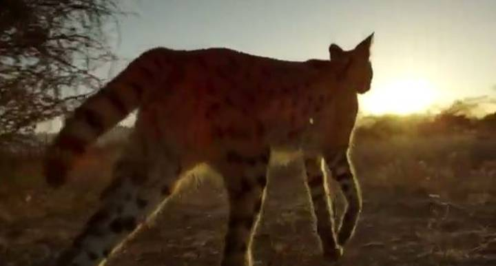 WATCH: New Extended Trailer For Planet Earth 2
