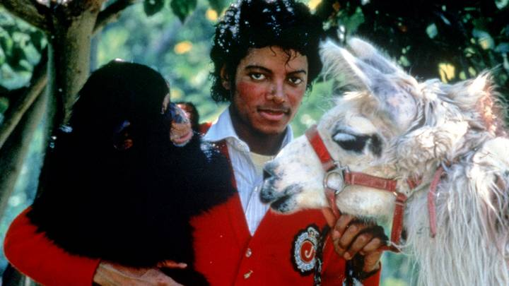 Michael Jackson's Pet Chimp Bubbles Is Still Alive And Well