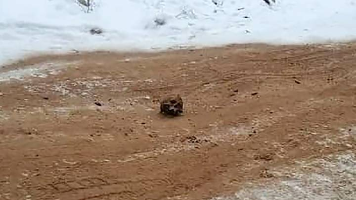 Human Bones Mixed With Sand 'Used To Grit Road' In Russia