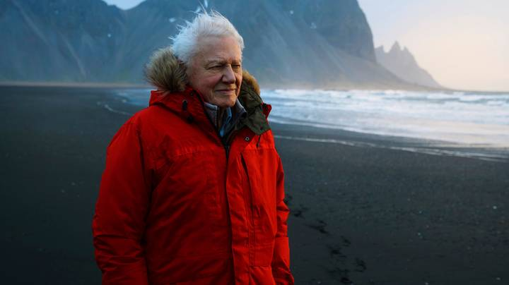 It Took 50 Years For David Attenborough To Film Monkey In New BBC Series
