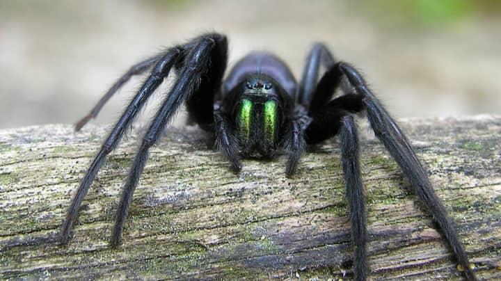 Bristol Woman Horrified As She's Bitten On Head By 'Dracula Spider'