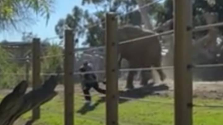 Man Arrested After Carrying Two-Year-Old Daughter Into Elephant Enclosure At Zoo