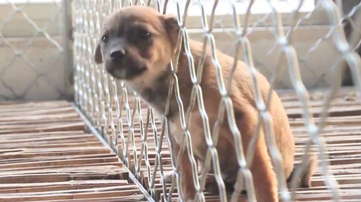 China Announces New Guidelines That Classify Dogs As Pets Rather Than Livestock