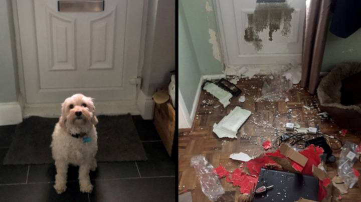 Dog Misses Owner, Chews Massive Hole In Front Door, Causes £1,500 Of Damage