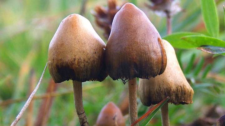 Canada Grants Special Exemption For Four Terminally Ill People To Do Psychedelic Mushrooms