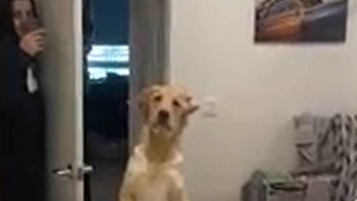 Dog Gets Confused By Owner's Reflection During Game Of Hide And Seek