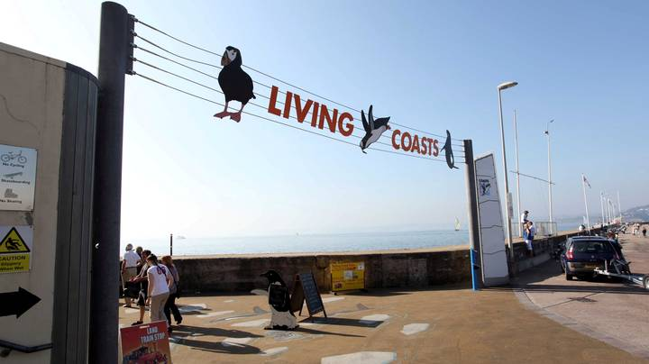 Living Coasts In Torquay Has Become The First UK Zoo To Close Down Because Of Coronavirus