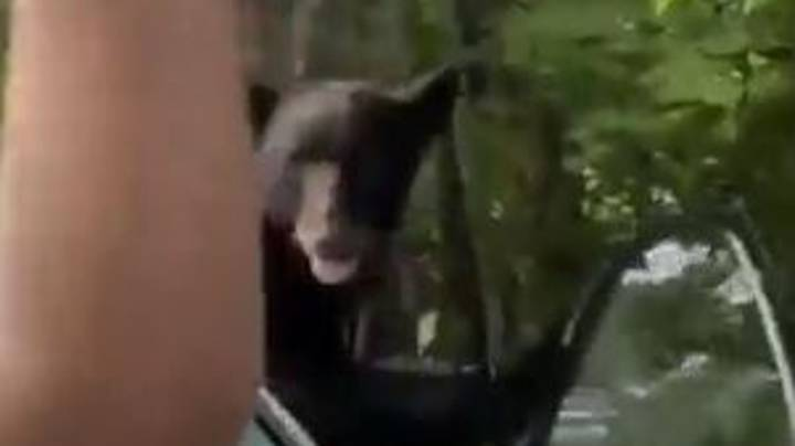 Man Risks Death As He Tries To Get Rid Of Bear That Broke Into His Car