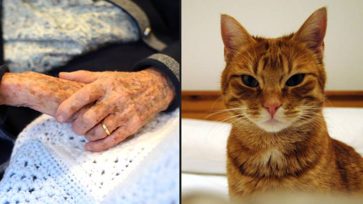 Elderly Woman's Body 'Devoured From The Waist Up' By Her Cats