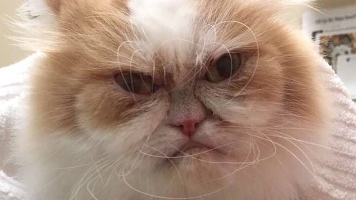 This Angry Feline Might Be The World's New 'Grumpy Cat'