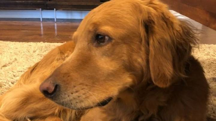 Hero Dog Is A 'Very Good Boy' After Saving Family From House Fire