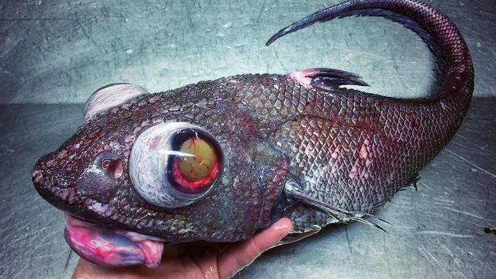 Deep Sea Fisherman Documents The 'Alien-Like' Creatures He Catches