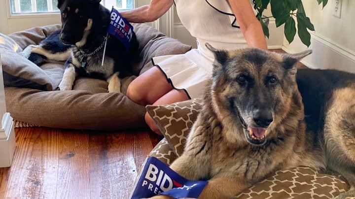 Joe Biden's Dogs Have Got Their Own Twitter Account
