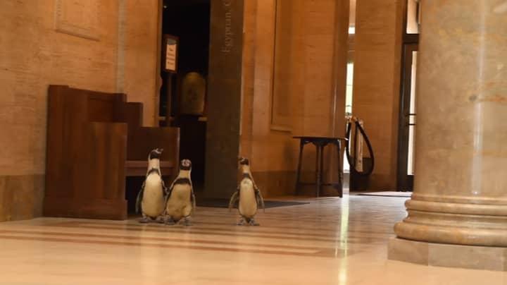 Penguins Wander Art Museum On Field Trip