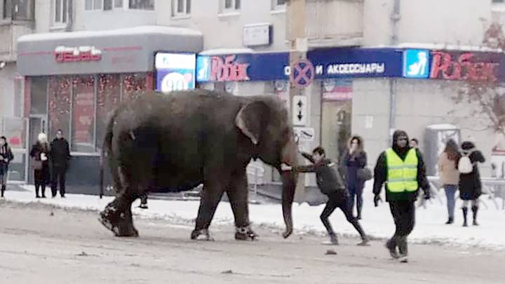 Heartwarming Video Shows Circus Elephants Playing In The Snow