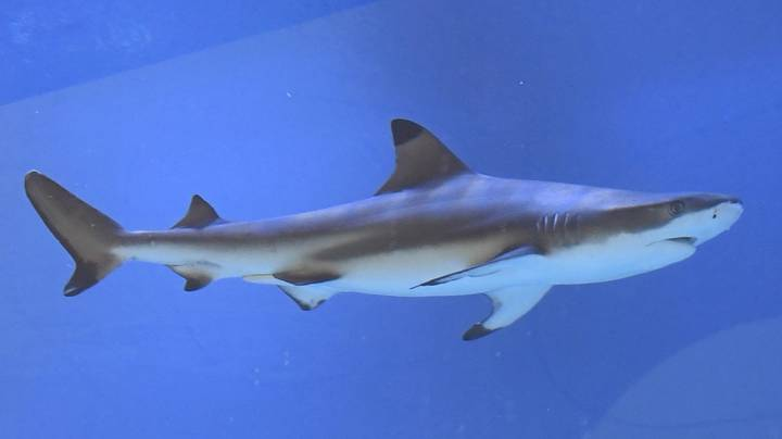 Thousands Of Sharks Have Migrated To The Florida Coast