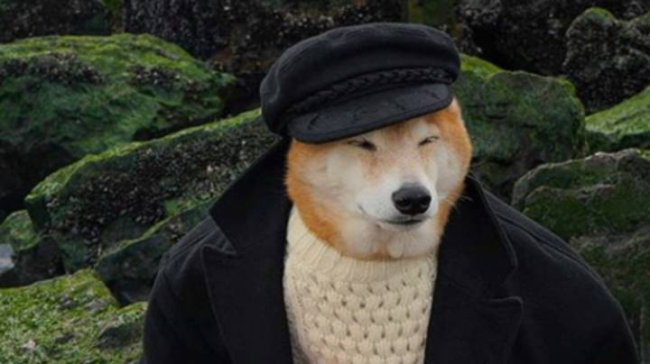 Super Stylish Dog Has More Than 400,000 Followers On Instagram