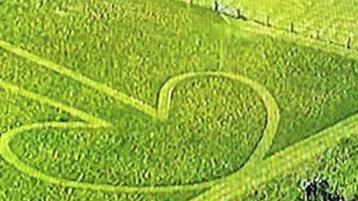 Police Discover Huge Penis In Farmer's Field While Chasing Suspect