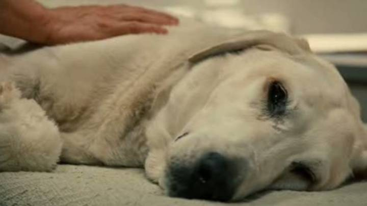 Vet Reveals What Pets Do In Their Final Moments