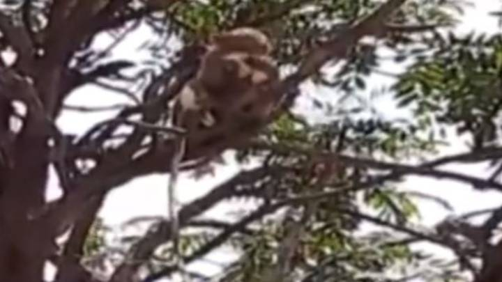 Monkeys Attack Scientist And 'Escape Lab With Covid-19 Samples'