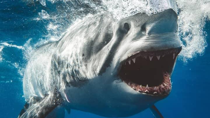 Photographer Captures Incredible Close-Up Shots Of Sharks