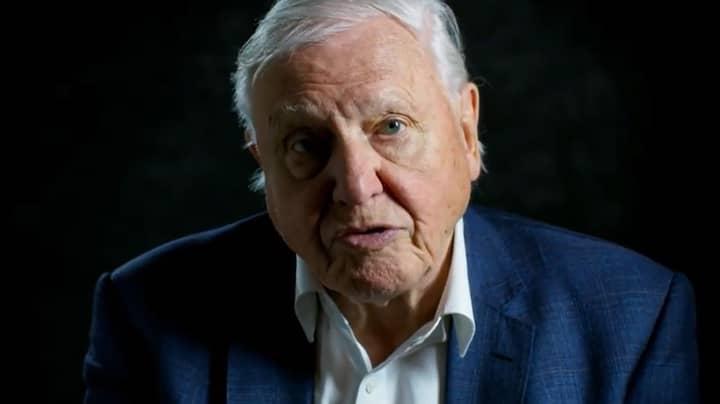 Sir David Attenborough Says Anti-Vaxxers Are The 'Ignorant' Minority