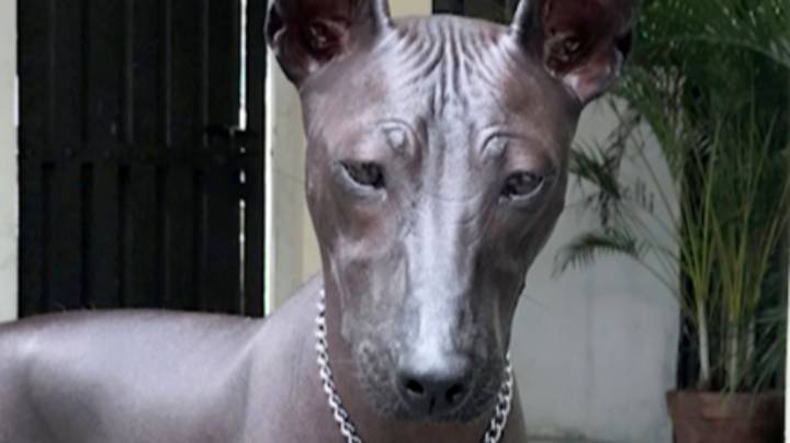 People Are Convinced This Rare Dog Is Actually A Statue