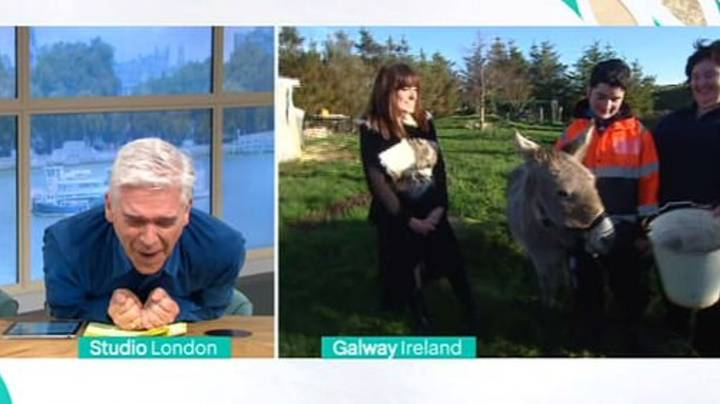 Harriet The 'Singing' Donkey Refuses To Duet On 'This Morning'
