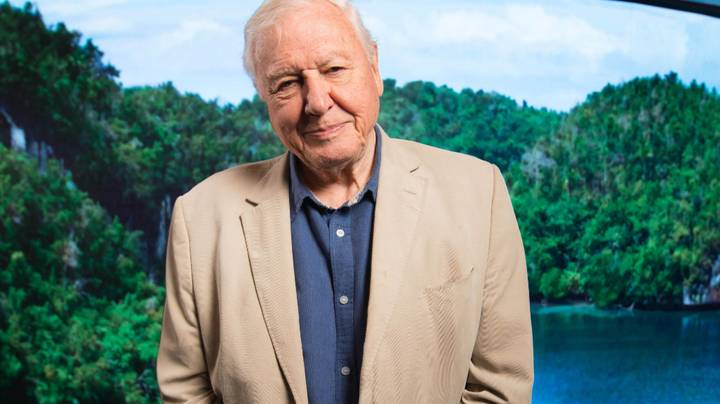 David Attenborough Confirmed For BBC Kids Lessons