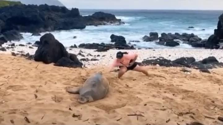 Man Denies Slapping Endangered Monk Seal In Viral Video