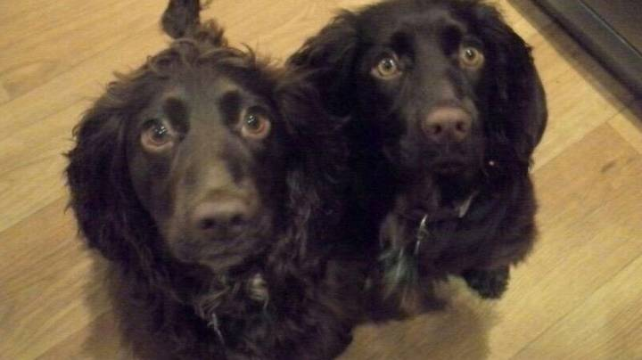 Dog Is Travelling 4,000 Miles To Saves One Of Its Puppies