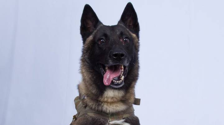 The US Military Dog That Helped Take Down The ISIS Leader