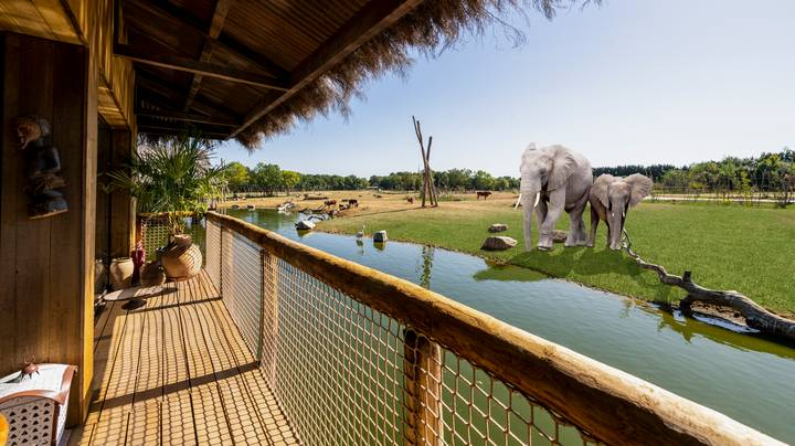 Luxury UK Safari Park Lodges Offering Stays With Elephants And Cheetahs