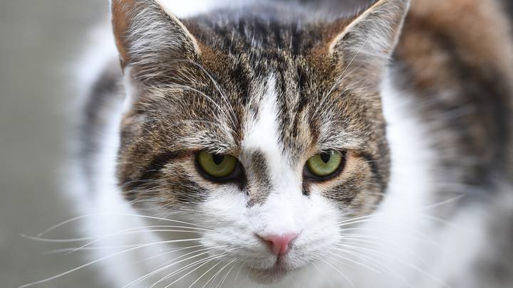 Vets Warning Vegans Not To Put Their Cats On A Plant-Based Diet