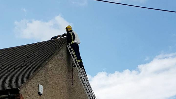 Parrot Trapped On Roof Keeps Telling Fire Crew To 'F*** Off'